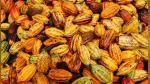 Cacao, la clave para probar el sabor de la paz en Colombia tras las FARC - Noticias de caida de arbol