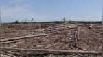 Fragmentación de selvas tropicales eleva en un tercio adicional emisiones CO2 - Noticias de andreas lesauvage