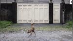 Curiosidades: perro de dos patas aprendió a caminar y  es inspiración en Facebook - Noticias de nombre del año