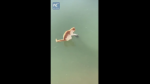 El tierno intento de un gato por apresar un pez congelado en un lago - Noticias de twitter