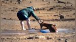 Turista arriesga su vida para salvar a impala atrapado en el lodo durante safari - Noticias de sudáfrica