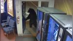 Oso entra casualmente a comisaría, sorprende a policías y se vuelve viral en Facebook - Noticias de facebook
