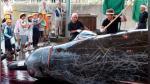 Japón abandona comisión que garantiza preservación de ballenas para poder cazarlas - Noticias de voto negativo