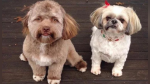"""La verdad detrás de 'Yogi', el perro con rostro """"humano"""" que asombra a Internet - Noticias de clases sociales"""