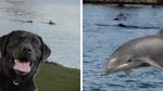 Perro y delfín nadan juntos como si fueran amigos de toda la vida - Noticias de familia
