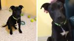 Pusieron a dormir a un perro pero este se resistió a morir y le dieron una segunda oportunidad de vida - Noticias de discapacidad