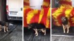 """Perrita callejera aprovecha lavado de autos para """"asearse"""" gratis - Noticias de turquía"""