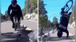 Ciclista sobrevive de milagro a choque con ciervo a toda velocidad - Noticias de gopro