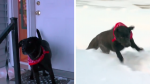 Perrita salvó de morir congelada a la anciana vecina de su dueño que cayó en la nieve - Noticias de calor
