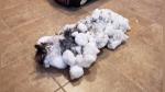 """Gata congelada por el vórtice polar """"vuelve"""" a la vida - Noticias de temperaturas bajas"""
