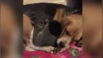 Perrita adopta a una zarigüeya bebé tras sufrir una notable pérdida - Noticias de dormir