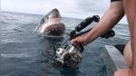Mira el aterrador momento en el que un enorme tiburón blanco emerge del agua - Noticias de peru