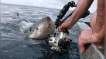 Mira el aterrador momento en el que un enorme tiburón blanco emerge del agua - Noticias de fotos