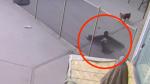 El increíble rescate de un perro Yorkie de las garras de un halcón - Noticias de cámaras