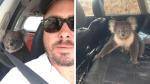 Koala se sube a auto con aire acondicionado para huir del calor y se rehúsa a bajar - Noticias de mascotas