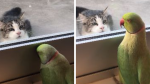 Cotorra que juega a las escondidas con gato te arrancará más de una sonrisa - Noticias de nueva zelanda