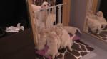 Una experimentada madre perruna enseña a sus cachorros a cómo ser pacientes - Noticias de raya