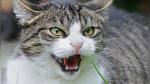 Gato se enfrenta a jauría de perros y el insólito desenlace deja boquiabiertos a miles - Noticias de animales
