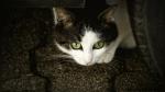 Gato es el 'peor enemigo' de un cartero y no le deja hacer su trabajo - Noticias de gato