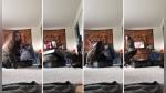 El confuso ataque de un gato a su dueña que solo quería jugarle una broma a su novio - Noticias de gato