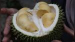 La fruta más apestosa del mundo obliga a evacuar a más de 500 personas de biblioteca - Noticias de estudio