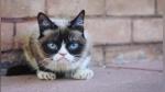 Muere la gata Grumpy Cat, la felina más famosa y enfadada de internet - Noticias de fil 2013