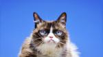 Muere la gata Grumpy Cat, la felina más famosa y enfadada de internet - Noticias de infección