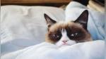 Muere la gata Grumpy Cat, la felina más famosa y enfadada de internet - Noticias de