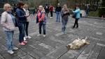 Un adorable perro se convirtió sin querer en una atracción turística - Noticias de barriga