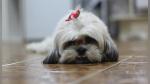 Sacrifican a perro sano para enterrarlo junto a su dueña y genera indignación en miles - Noticias de día del amor
