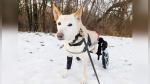 El final feliz de Lunita, una perrita con parálisis abandonada con su silla de ruedas rota y una bolsa de pañales - Noticias de helicoptero