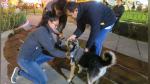 Dejó su exitosa vida como ingeniero para dedicarse a cuidar a más de mil perros callejeros - Noticias de yoga