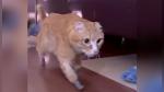 Un gato recibe cuatro patas 'biónicas' después de perder sus extremidades por el frío - Noticias de avistamiento de ballenas