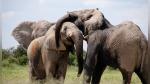 Elefantes le dan el último adiós a una de sus crías con un conmovedor 'cortejo fúnebre' - Noticias de elefantes