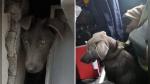 El dramático rescate de un perro atrapado en un agujero de una estación de bus - Noticias de colombia