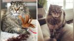 """Gato viejo """"rejuvenece"""" gracias al amor de la mujer que lo rescató y su nueva dueña - Noticias de día de la madre"""