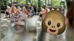 Mono interrumpió foto familiar con un saludo que dejó boquiabierto a más de uno - Noticias de social media