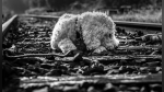 Maquinista salva a un perro encadenado a las vías de ser arrollado por el tren que manejaba - Noticias de ever felipe p������������������rez cabanillas