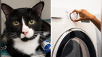 Un gato quedó atrapado en una lavadora por un ciclo completo y sobrevivió de milagro - Noticias de neumonía