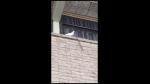 Cacatúa enfurece y tiene impensada reacción al ver púas en ventanas donde suele estar - Noticias de plástico