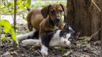 Perro se niega a dejar a gato que cuidó por semanas y conmueve a internautas - Noticias de perros