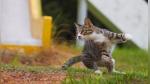 Fotógrafo captura gatos en posiciones ninja y se vuelve viral en Instagram - Noticias de