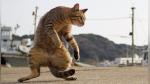 Fotógrafo captura gatos en posiciones ninja y se vuelve viral en Instagram - Noticias de japon