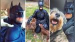 Se disfraza como Batman para rescatar a animales a punto de ser sacrificados y les busca nuevas familias - Noticias de comic con