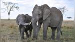 A los elefantes les encanta bailar y más aún si es al ritmo del violín - Noticias de musica