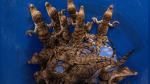 Una central nuclear, el refugio perfecto para el cocodrilo americano en Miami - Noticias de chips