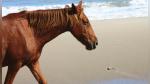 Turista ignora los avisos de no tocar a los caballos y sufre las dolorosas consecuencias - Noticias de estados unidos