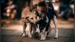 Unos perros callejeros salvaron la vida de una recién nacida abandonada en un drenaje - Noticias de salud infantil