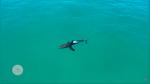 Grababa con drone en playa y descubre que tiburón estaba a pocos metros de niños - Noticias de tiburón