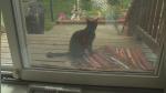 Controversia por caso de mujer de 79 años condenada a prisión por alimentar a gatos callejeros - Noticias de día de la madre